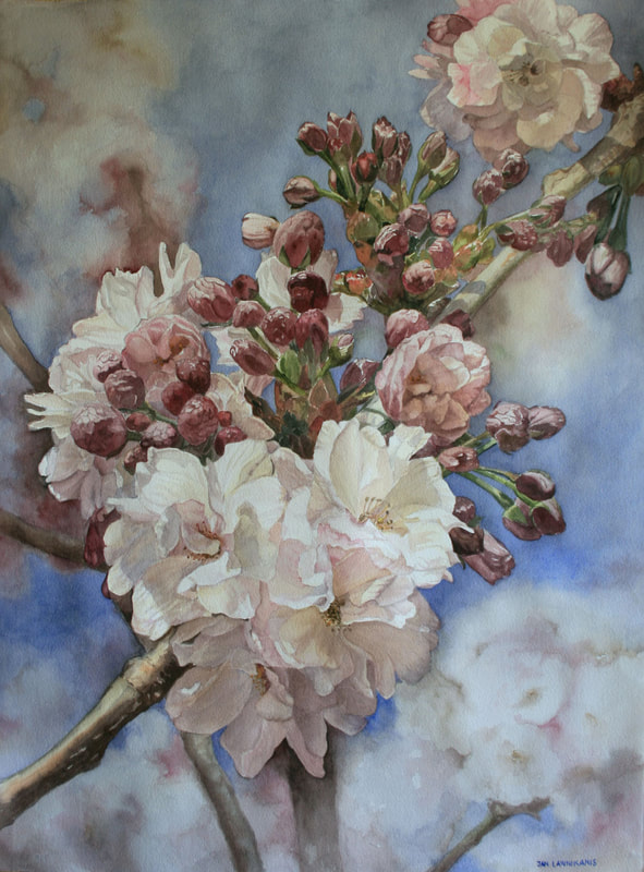 Pink and white fruit blossoms, watercolour