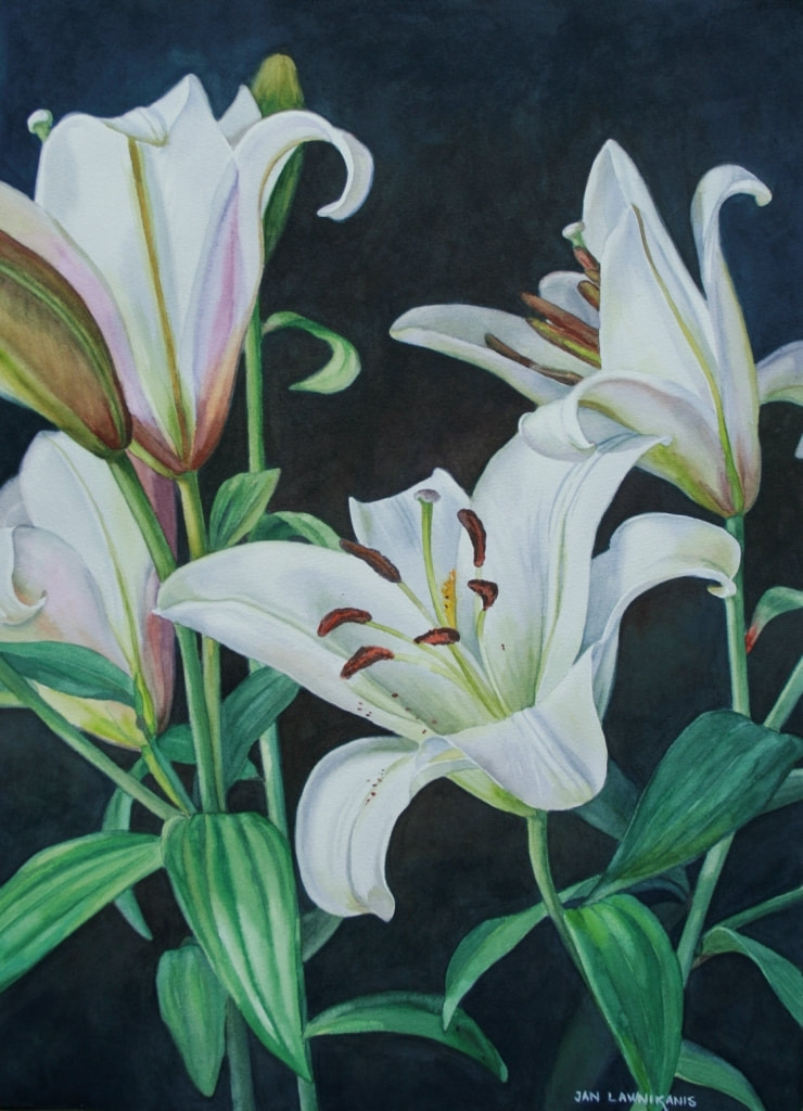 White oriental lilies, watercolour