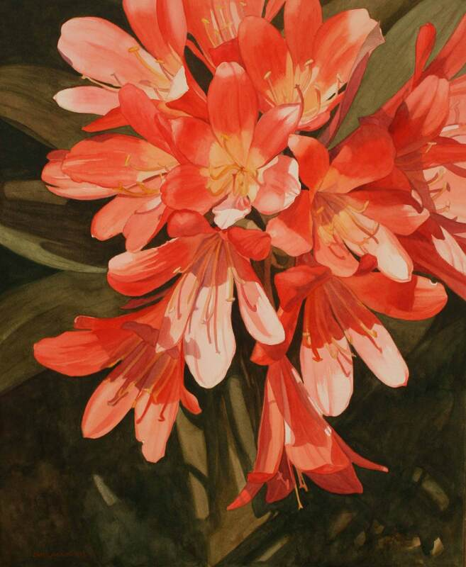 Orange clivia flowers, watercolour