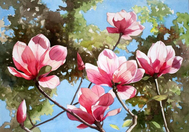 Backlit magnolias, watercolour