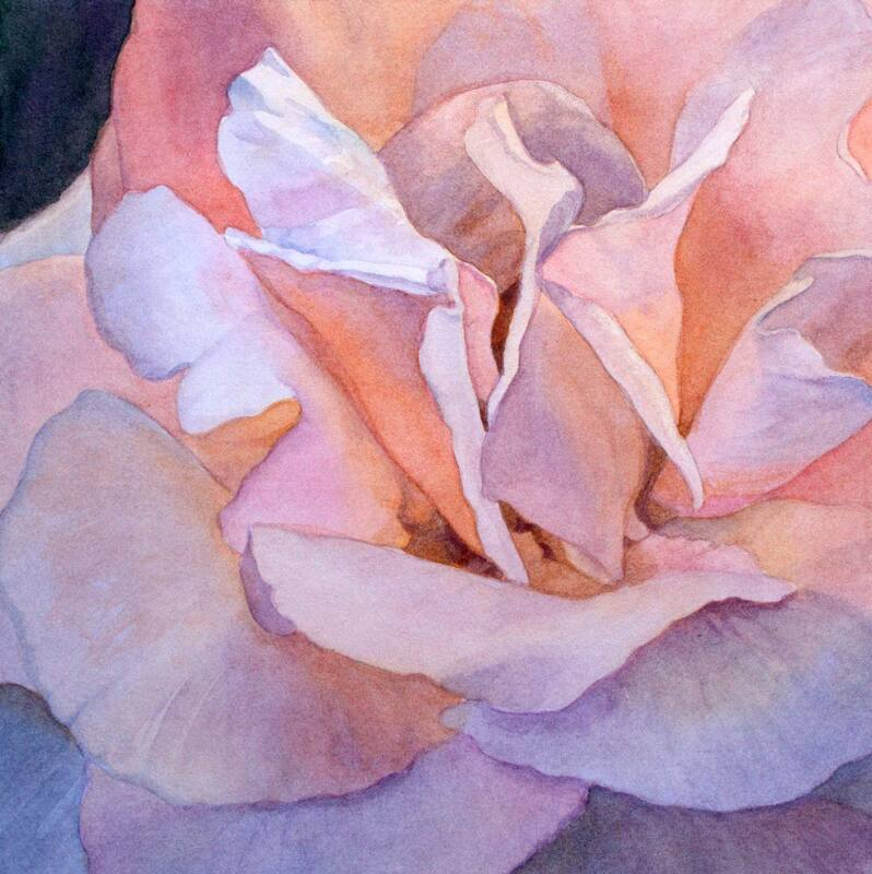 Pink rose close-up, watercolour