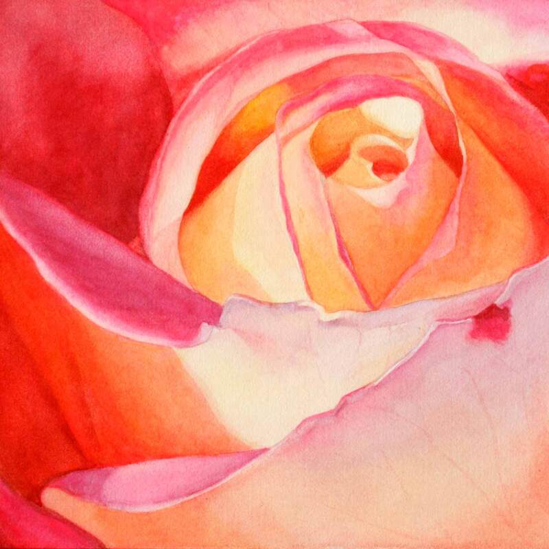 Pink and yellow rose close-up, watercolour