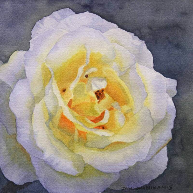 White and yellow rose close-up, watercolour
