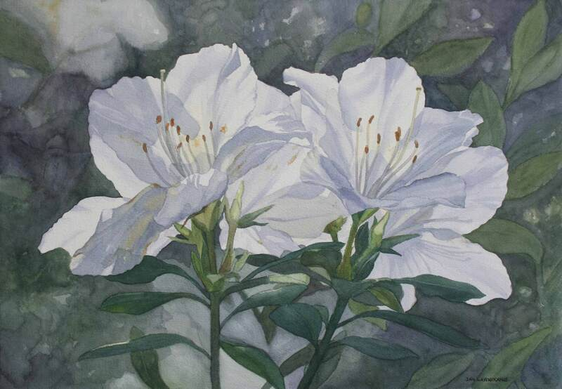 White azaleas, watercolour